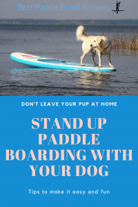 tips to stand up paddle board with your dog
