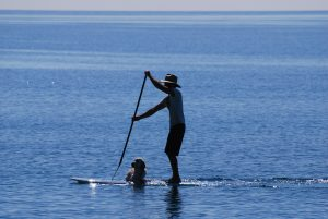 a dog and owner stand up paddle boarding