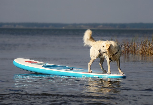 Stand up Paddle boarding with your dog